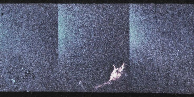 La foto passata alla storia come il corpo e il collo (sottosopra) di Nessie