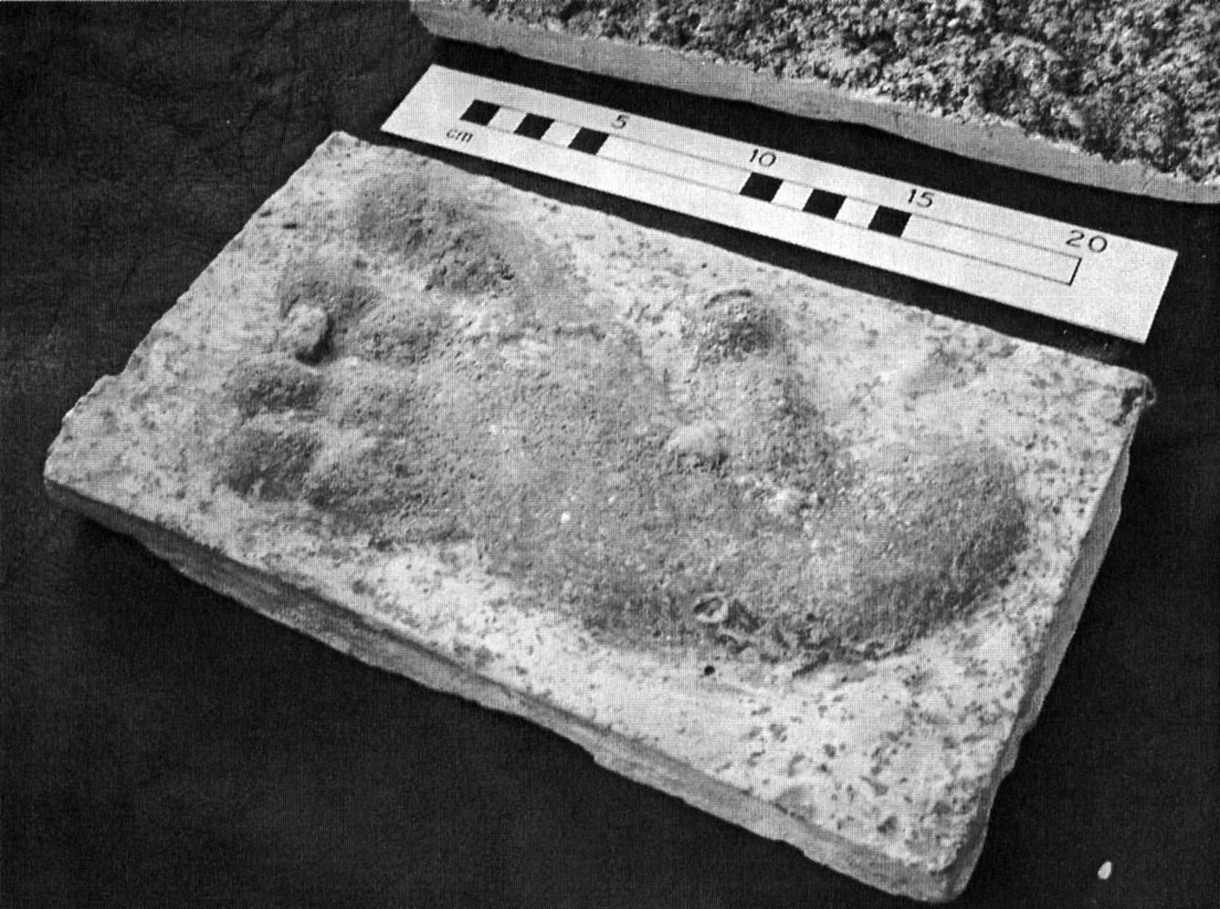 Questo calco di impronta misteriosa, attribuita all'orang pendek, è conservato presso il Natural History Museum di Londra