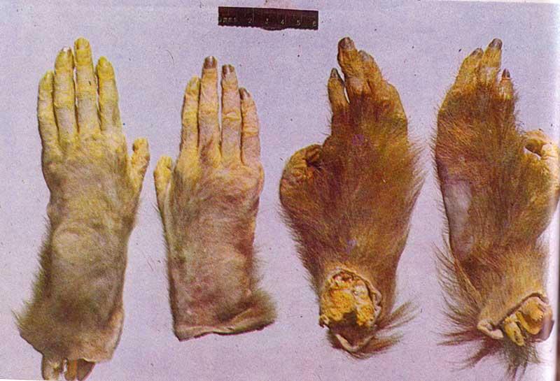 Mani e piedi dell'animale ucciso nel 1957 a Zhuanxian