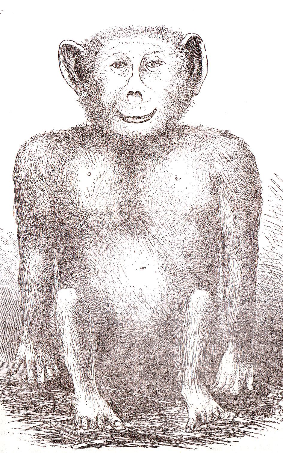 Il soko secondo Livingstone, 1874
