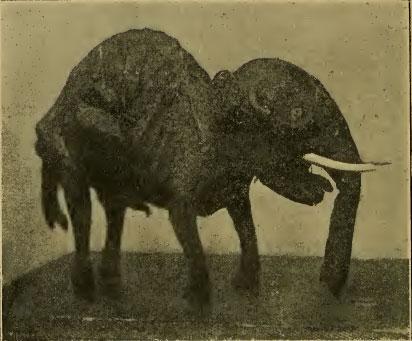 Lo ye-sin inviato da Hopwood all'attenzione del The Journal of Bombay Natural History Society