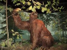Ricostruzione di un bradipo terrestre. Secondo alcuni zoologi le descrizioni di alcune creature leggendarie del Sudamerica collimano con quelle di questi animali estinti.