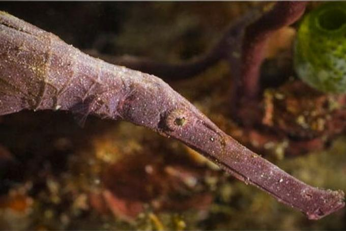 Un pesce ago può essere scambiato per un mostro?