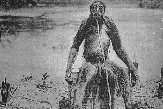 Questa fotografia di un presunto primate misterioso, portò scompiglio nel mondo accademico dell'epoca per diversi anni