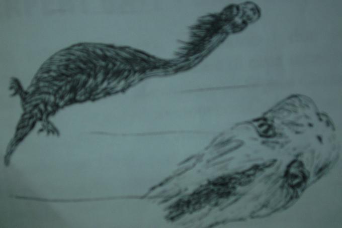 """il """"serpegatto"""", misteriosa creatura delle valli ossolane, secondo un testimone"""