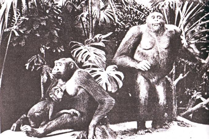 I tre esemplari di gorilla del Museo di Francoforte che Elliot descrisse con il nuovo genere Pseudogorilla